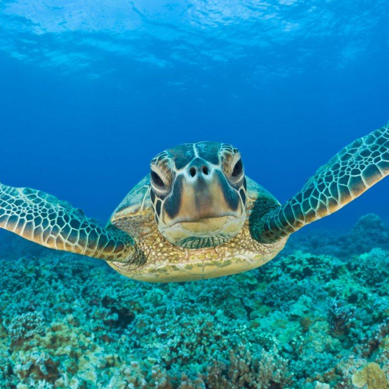 Черепаха Копилка