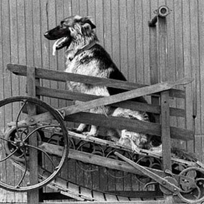 Фитнес для собаки