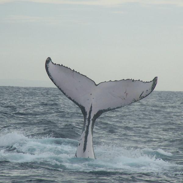 Открытие о древних китах