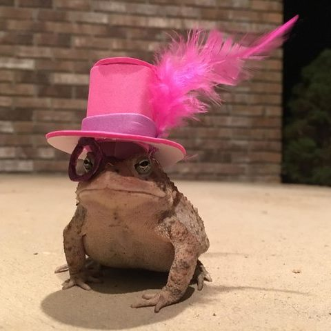 Шляпы для жабы