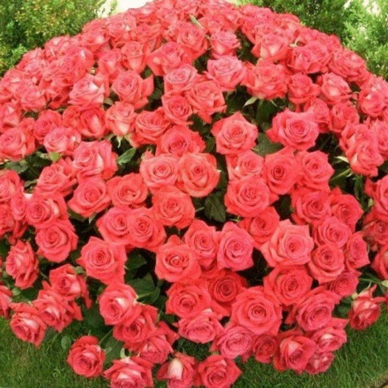 Цветы для селфи