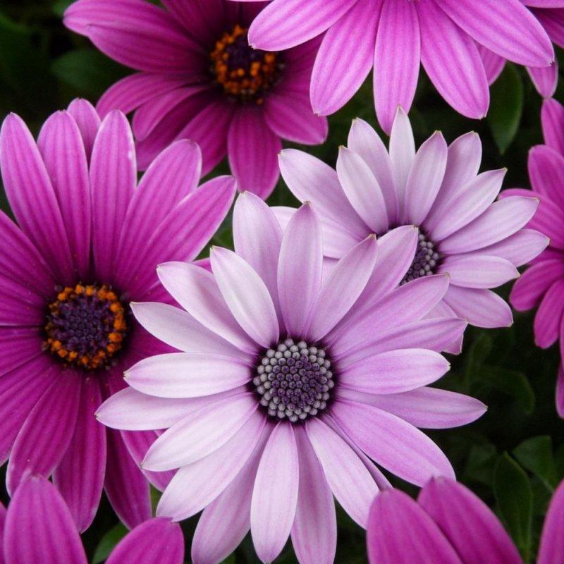 Цветы в Екатеринбурге
