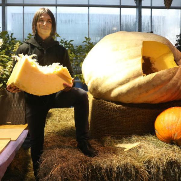 Овощ-гигант