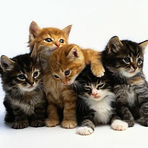 Автомат с котятами