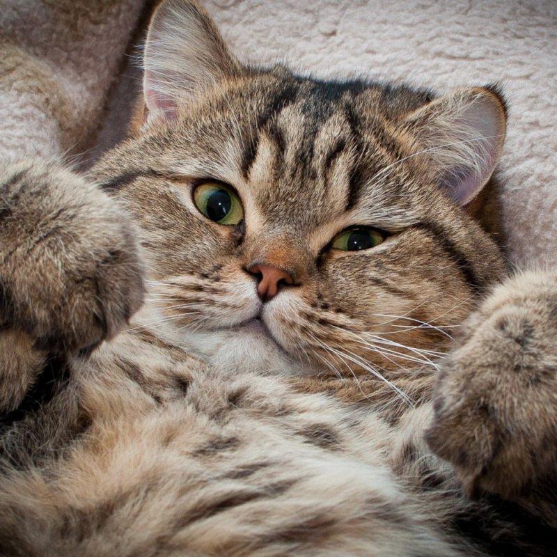 Обниматель котиков