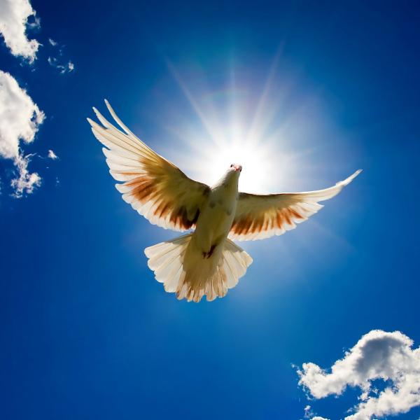 Мир во всём мире