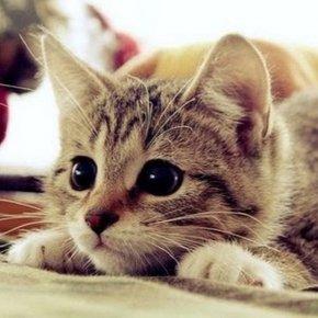 Блудный кот