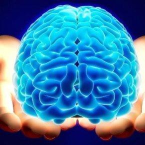 Честный мозг