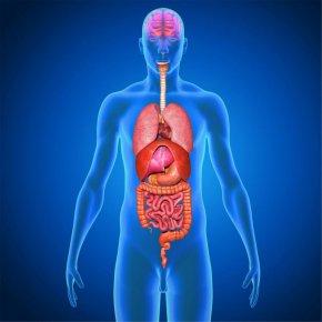 Лишние органы