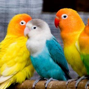 Попугаи умеют смеяться