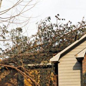 Дерево на крыше