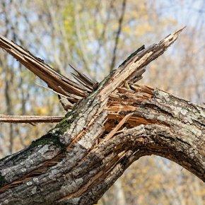 Сломалось дерево Вашингтона