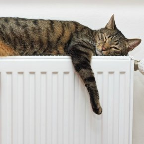 В ожидании тепла